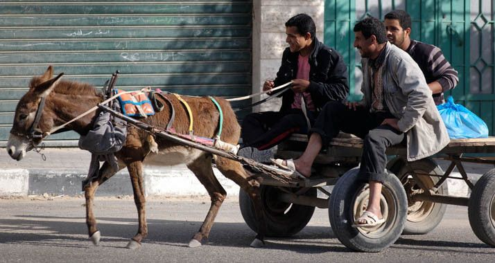 Der Wirtschaftsausschuss der Knesset hat am Sonntag ein Verbot von Pferde- und Eselwagen auf städtischen Strassen erlassen. Pferdekutschen für Touristen trifft die neue Regelung jedoch nicht. Vertr...