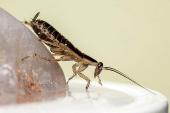 كيفية القضاء على الصراصير الصغيرة في المطبخ Cold Symptoms Allergies Allergy Medication