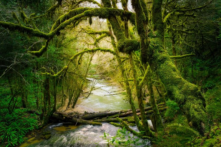 Deep Forest by Justin Walker on 500px