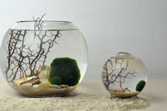 Marimo Terrarium - Japanese Moss Ball Aquarium - fishbowl glass vase - Giant Marimo - Marimo Nano  - sea fan - sea shells - sand