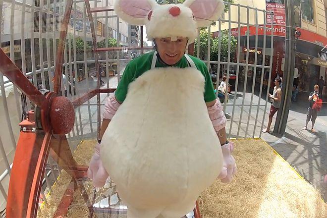 Como ratos de laboratório, corriam numa roda para ganhar 1 pacote de salgadinho http://www.bluebus.com.br/como-ratos-de-laboratorio-corriam-numa-roda-para-ganhar-1-pacote-de-salgadinho/