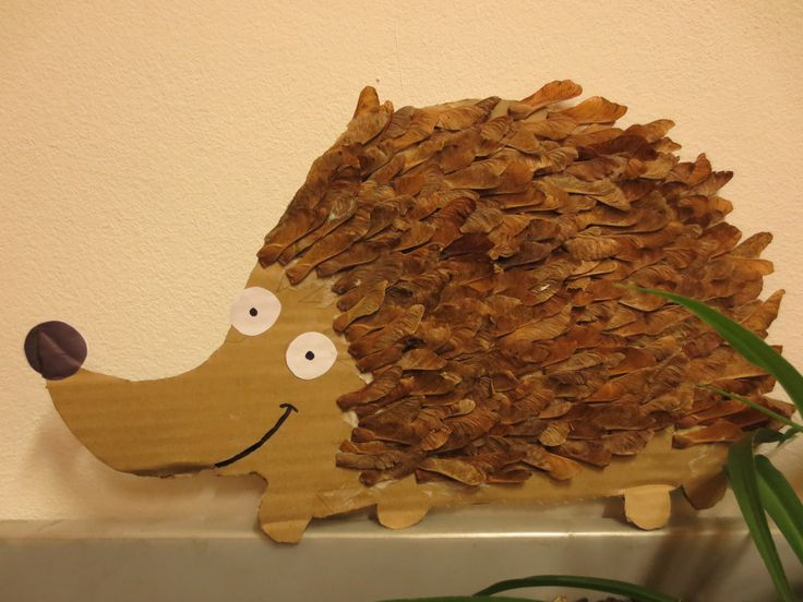 ježek, teka teka in se kotali ... hedgehog