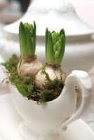 Beautiful hostess gift or shelf decor: bulbs in a gravy boat or another vintage container.