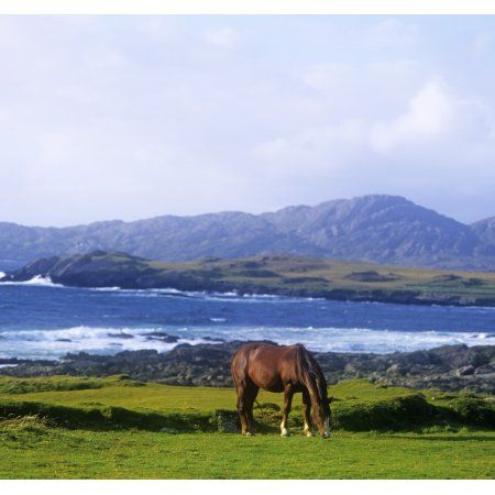 Horse Grazing In A Field Beara Peninsula Allihies County Cork Republic Of Ireland Canvas Art - The Irish Image Collection Design Pics (28 x 26)