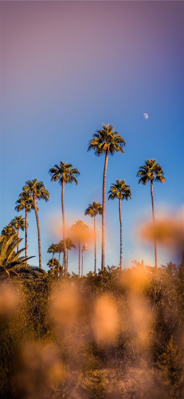 Colorful Life iPhone X wallpaper #trees #nature #moon #beaches #palmtrees