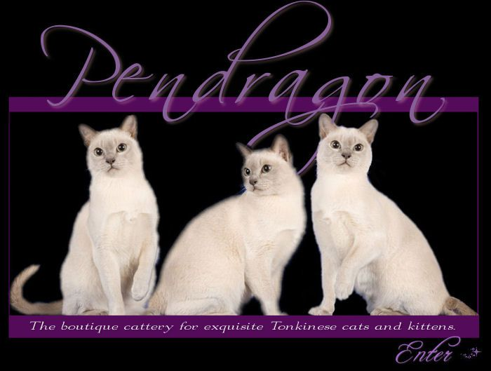 The breeder of our wonderful Tonkinese cats(oringinal pinner).  I hear great things about these beautiful cats! Two friends have and adore them.