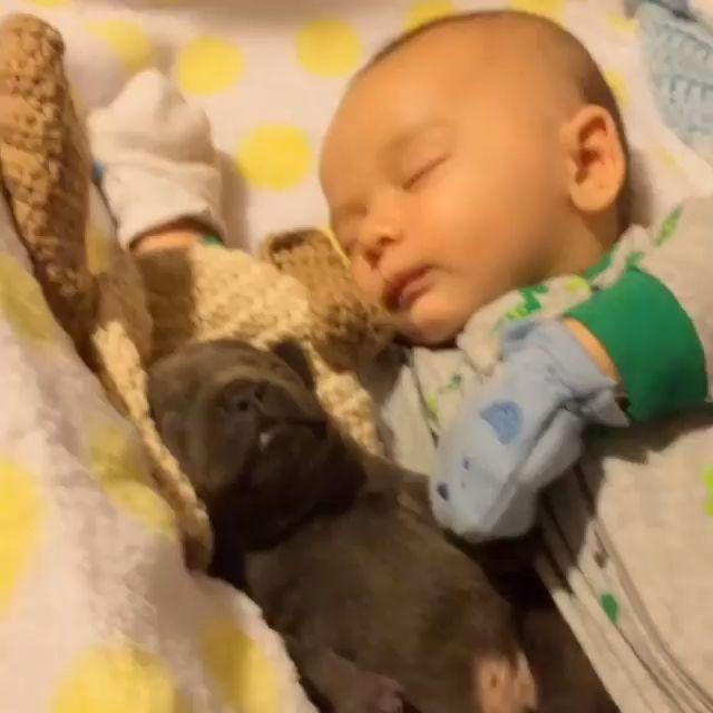 Good night  – Lustige hunde
