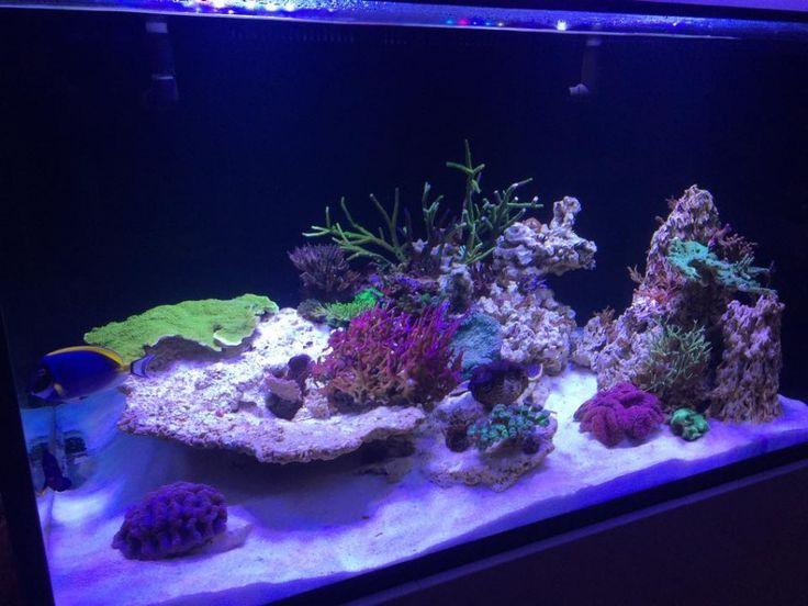 400 Best Images About Orphek Aquarium Led Lighting On