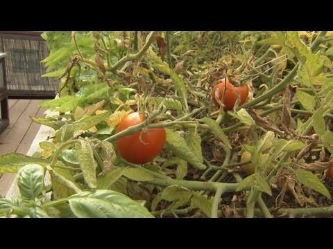 Best Gardening Videos Images On Pinterest Gardening Tips