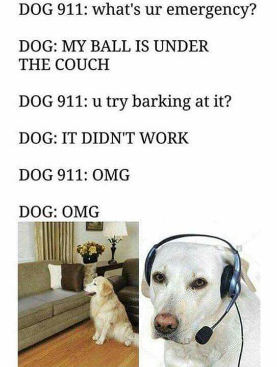 Delta calls Dog 911 for this emergency all the time... 😂😂😂