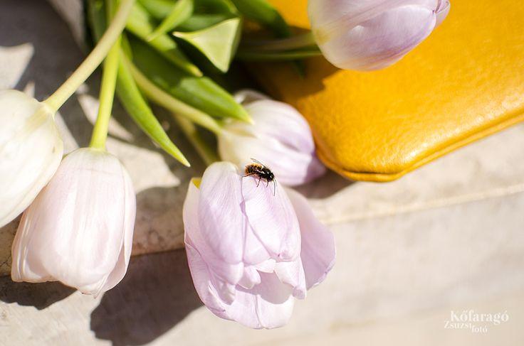 SPRING by kofaragozsuzsiphotos  www.facebook.com/kofaragozsuzsiphotos