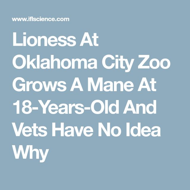 Lioness At Oklahoma City Zoo Grows A Mane At 18-Years-Old And Vets Have No Idea Why