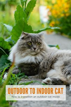 Whether you're adopting a stray or moving from a house to an apartment - here are our top tips to help transition an outdoor cat indoors| How to Transition an Outdoor Cat to an Indoor Cat