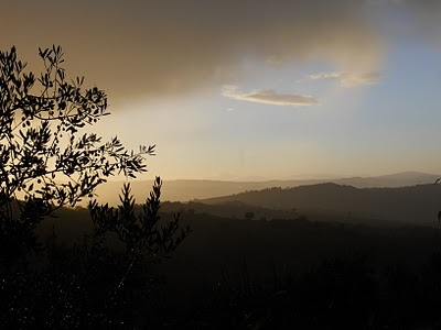 Olive trees silhouetted against an Umbrian sky.