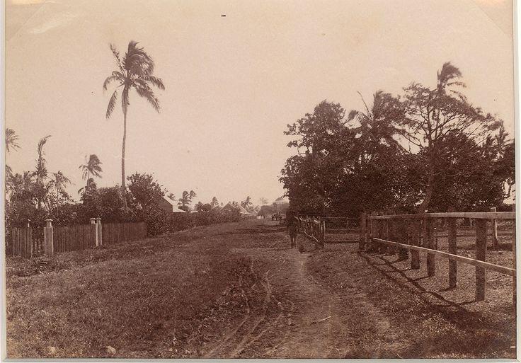 Pea, Tonga in 1889