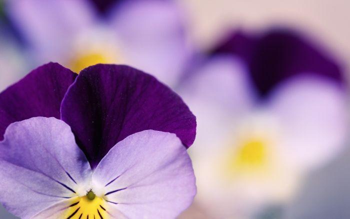 Обои на рабочий стол Цветы:Красивые обои для рабочего стола, Цветы, Макро фотографии, Бесплатные картинки, Сады - скачать бесплатно. | Обои-на-стол.com