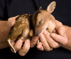//Cutest Baby, Baby Deer, Animal Pictures, Animal Baby, Sweets, Baby Baby, My Heart, Baby Animals, Cute Babies