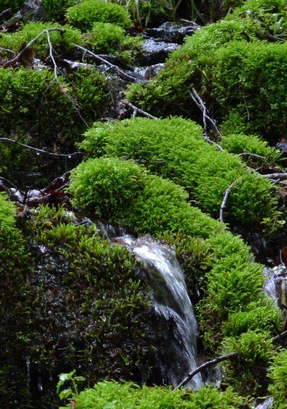 秋田県境にまたがる奥羽山脈の「女神山」(956メートル)は初心者向きだ。梅雨空を吹き飛ばす新緑のブナの原生林と白糸の滝などの名(めい)瀑(ばく)が迎えてくれる。初夏の山野草をめでながら1時間半余りで頂に立った。仙北平野のかなたに鳥海山が眺望できる。下りはブナ見平、女神霊泉でのどを潤し、七つの滝巡りを楽しんだ。