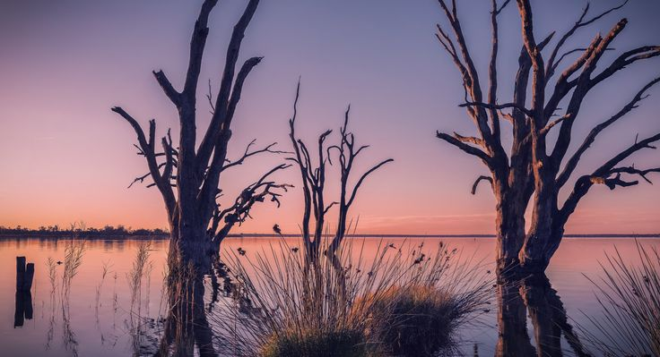 - D e a d l a n d s - - Lake Bonney, Barmera..A winter sunset, this was my first attempt at a focus stacked image..will be using this technique in future for sure.