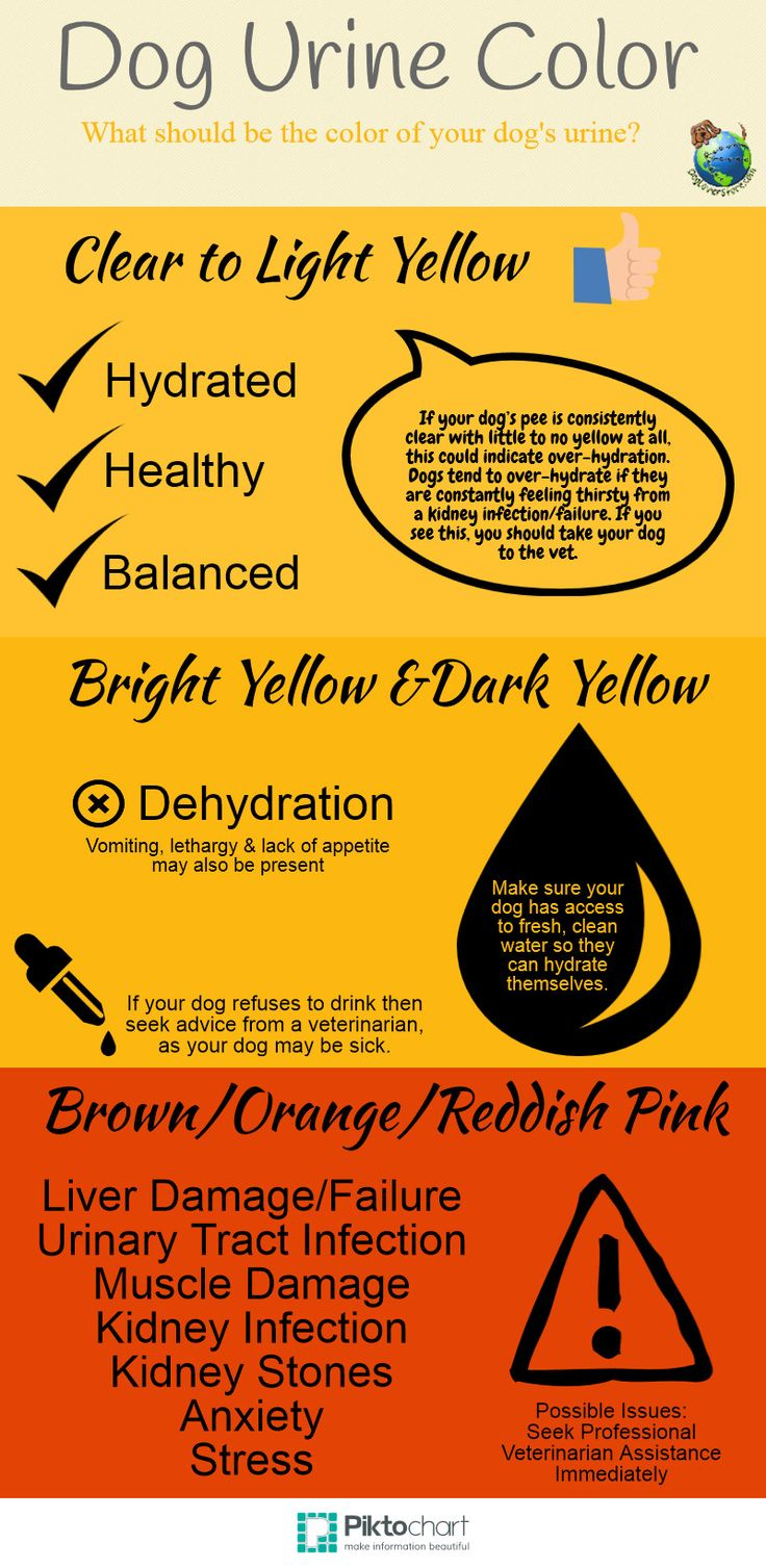 Dog Urine Color What Does it Mean? Clear, Dark Yellow