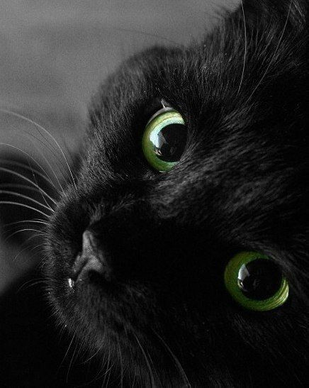 love this beautiful black kitten with emerald green eyes