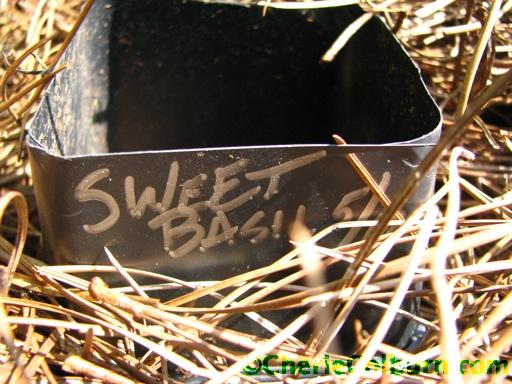 seed marker basil
