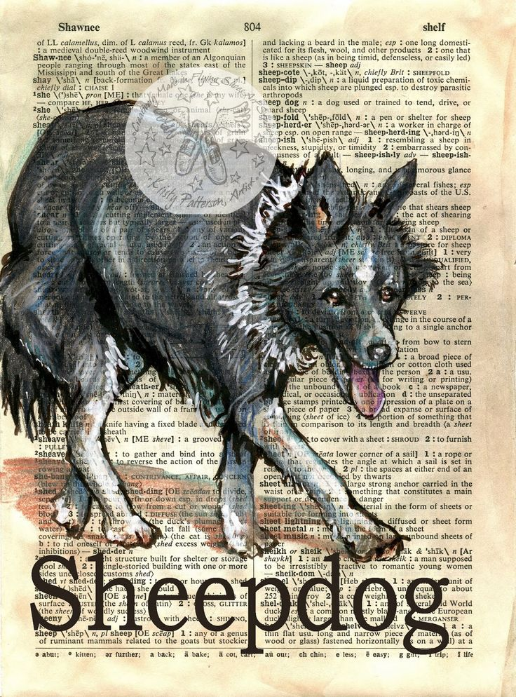 Sheepdog by Kristy Patterson