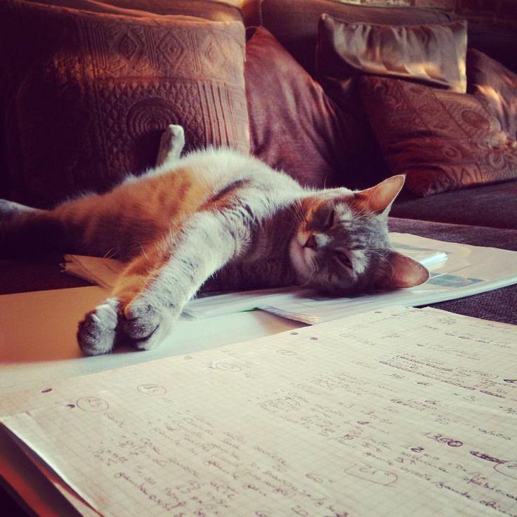 She's so tired...  #micetta #micetti #houseanimal #gatti #catlovers #catsofinstagram #catloversworld #catloverscatoftheday #cat #catoftheday #micettidolci #sweetcat #lovingcat
