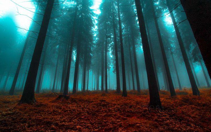 Magic Forest by Mirko Fikentscher on 500px