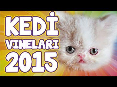En Komik Kedi Vine Videoları 2015 - Komik Kediler - YouTube