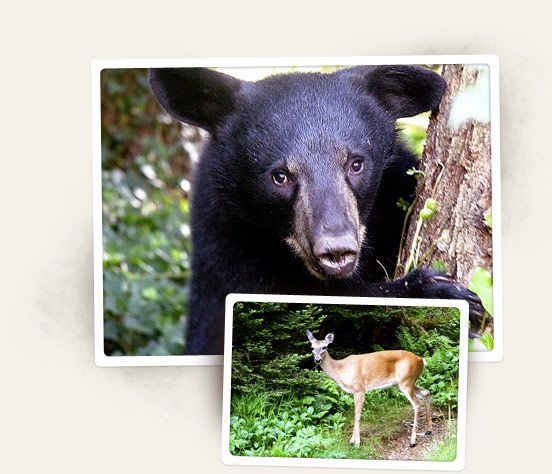 Learn about Wildlife and Nature in Great Smoky Mountain National Park