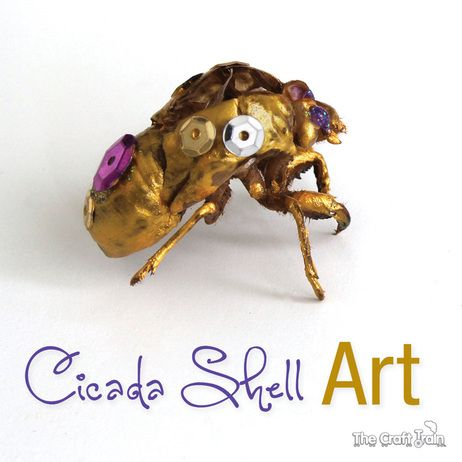 Cicada shell art – collect the shells and decorate them