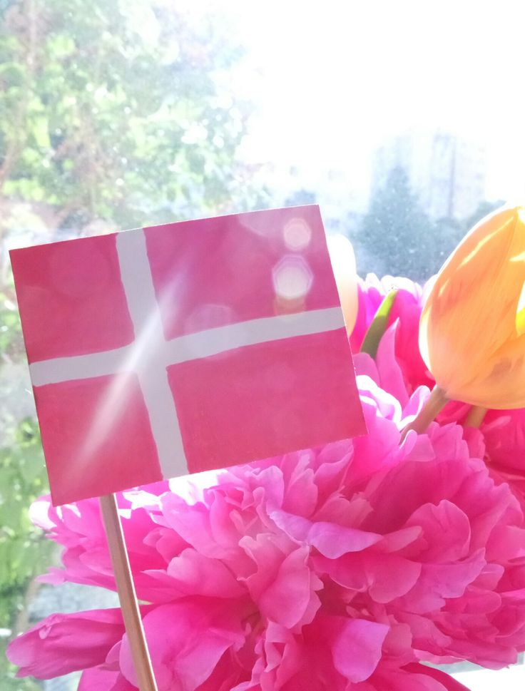 Bia Tan Blog: I Got in! Let the Adventure Begin! New blog post! I'm sharing with you some happy news 💕  https://wordpress.com/post/biatanblog.wordpress.com/949  Lovely pink and yellow flowers, and Denmark flag