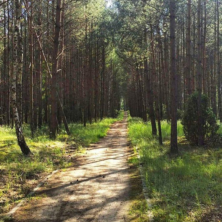 #KaszubskaMarszruta done. Będzie tęskno bo okolice przepiękne i infrastruktura rowerowa wyborna . #neirawypełzaznory #BoryTucholskie  #rowery #las #wyprawarowerowa  #bicycling #forest #bicycletrip