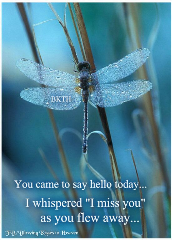 I think of my Pop every time I see a dragonfly, because that was my sign he sent me many years ago, to show me that he was there - Dragonfly Sign from our Angels