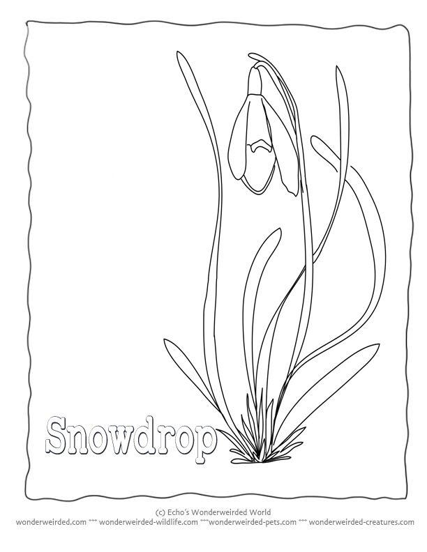 191 best Snowdrop flower Art/ill. images on Pinterest