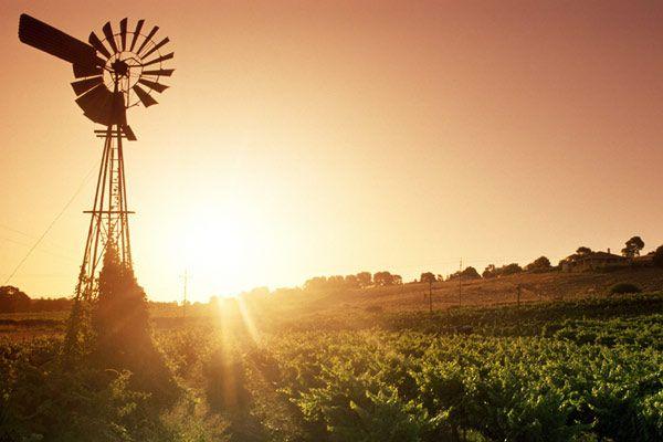 Sample Barossa Valley's finest wines