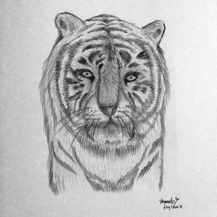 24 Dec 2013 : my white tiger ;)