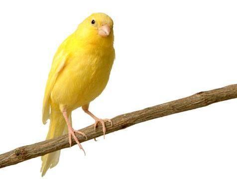 Jaulas para canarios