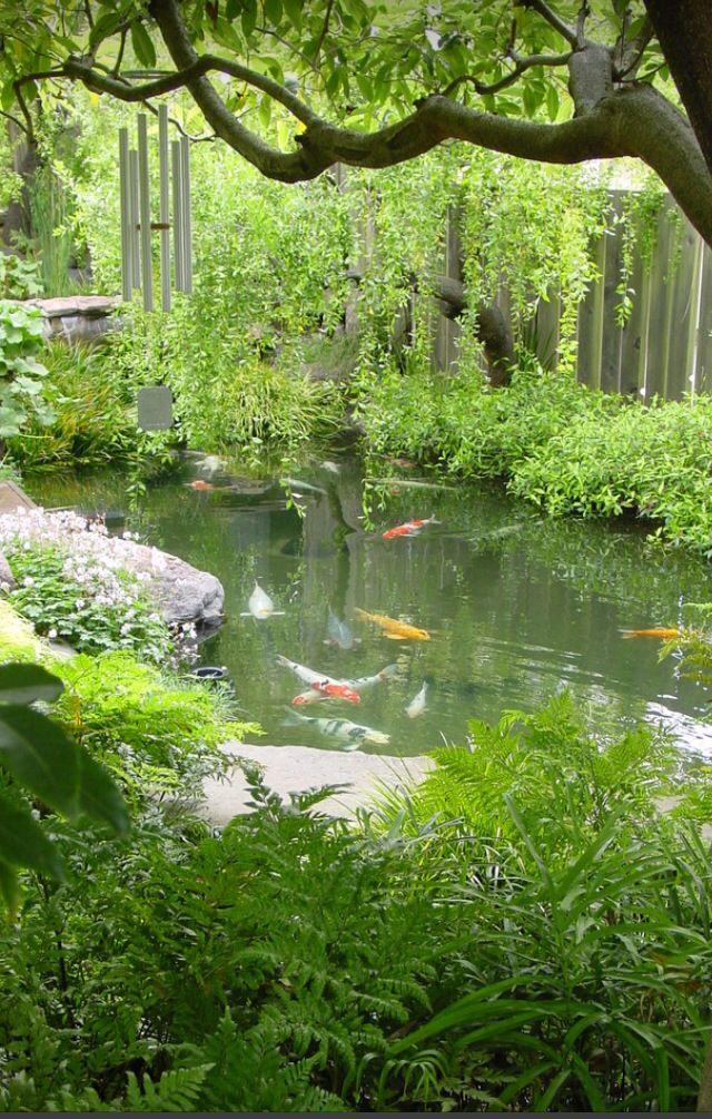 438 best koi koi ponds images on pinterest backyard for Best koi pond