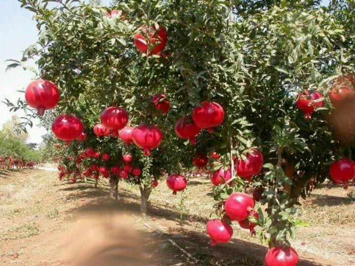 My Grandma's back garden in Rosh Ha'ayin, in the summer holidays.