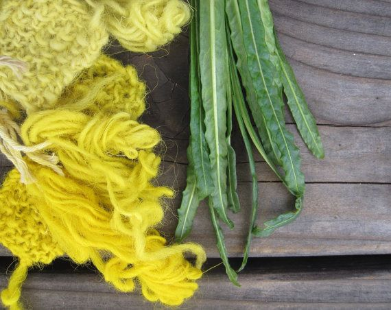 Weld Seed Reseda luteola Natural Dye Plant Seeds by EcotoneThreads