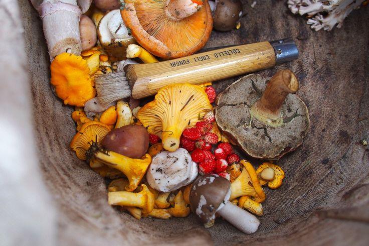 Tout ce que vous devez savoir sur la cueillette de champignon !