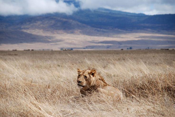 Prírodné divy sveta #2 - Chránená oblasť Ngorongoro