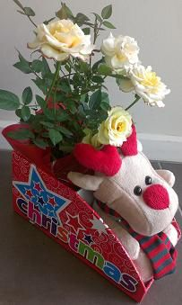 what a perfect gift idea! a stunning flowering mini - rose and the cutest reindeer plush toy! all in an attractive gift box! your customers will love these! http://www.summerhillnurseries.com.au/www/content/default.aspx?cid=1775&fid=670