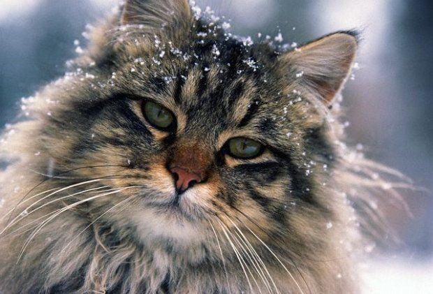 Cute Love Saying Wallpapers Pin On Animals Cats