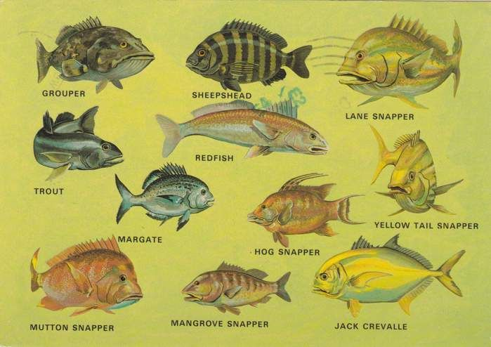 1000 images about florida fishes on pinterest fields for Florida game and fish