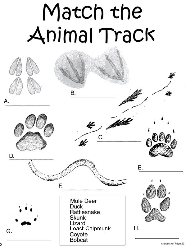 Forest Animal Tracks Coloring Page | Coloring Pages