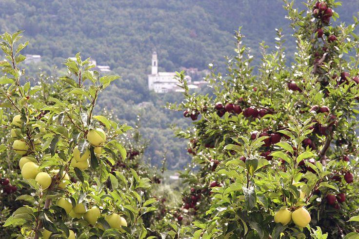 11-13 ottobre 2013 - Sagra della mela e dell'uva di Villa di Tirano