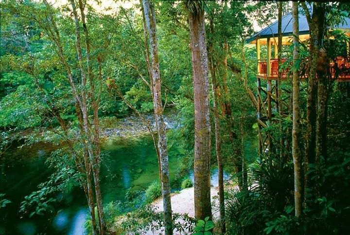 Tree-house living overlooking the Daintree Rainforest (image via Silky Oaks Lodge and Spa)